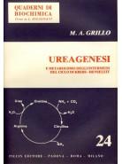 Ureagenesi - e Metabolismo degli Intermedi del Ciclo di Krebs - Henseleit