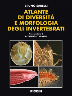 Atlante di diversità e morfologia degli invertebrati