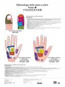Poster di riflessologia della mano a colori