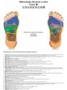 Poster di riflessologia del piede a colori