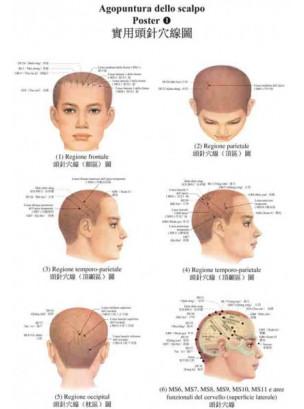 Poster di agopuntura dello scalpo