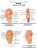 Poster a colori di agopuntura auricolare