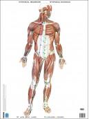 Poster manipolazione fasciale: apparato locomotore - Fascial Manipulation Posters: Locomotor Apparatus