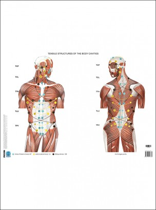 Poster manipolazione fasciale: parte internistica - Fascial Manipulation Posters: Internal Part