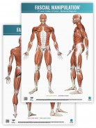 Fascial Manipulation - 2nd Level - CF - Myofascial Sequences