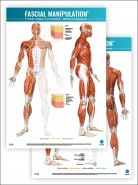 FASCIAL MANIPULATION ® 1st Level Poster: Centers of Coordination • Myofascial Sequences