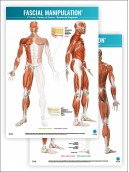 FASCIAL MANIPULATION ® 2nd Level Poster: Centers of Fusion • Myofascial Diagonals