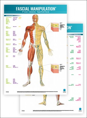 FASCIAL MANIPULATION ® 3rd Level Poster: Catenaries • Superficial Fascia
