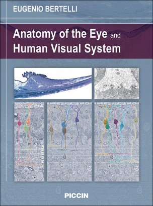 Anatomy of the Eye and Visual Human System