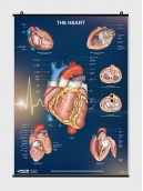 The Heart - Poster